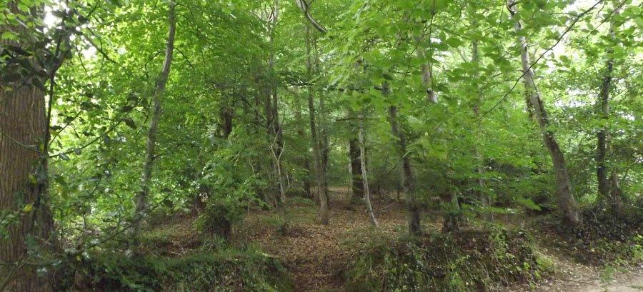 Native British woodland